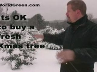 Christmas Trees Are Green, How to Green Your Christmas