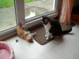 Chaussettes et Azraël, jeu de pattes, jeu de chats