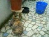 La dure vie de lapin ( Pinousitting Le balcon 2)