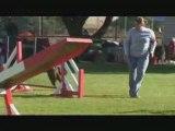 Montage looping saison agility 2008