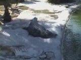 Tunisie, Djerba, l''ile aux crocodiles,