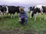 Martijn tussen de koeien 2