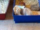 Rosette qui squat la cage a Sirius