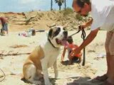 Pet Training, Trainers in Florida