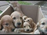 dogs 101 dog answers pitbull dog training