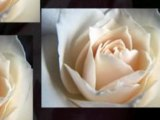 Boca Raton Florists & Flowers: SAME DAY DELIVERY