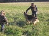 Ballade avec les chiens