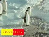 Pinguin Mobbing 1