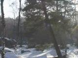La forêt de Fontainebleau sous la Neige