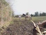 montage dridri travail au sol très vif