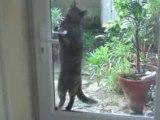 notre chat Kita ouvre la porte