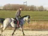 Hongre cso prêt 1m30 - chevaux de sport