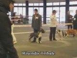 rixendis tribale vs de la missaudiere expo bordeaux 2009