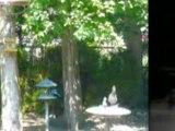 Vernon East Hill View Rancher Okanagan RealEstate Video Tour