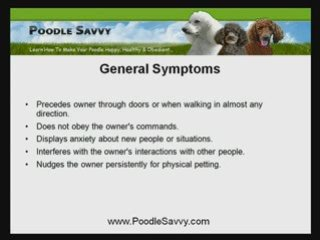 Poodle Puppy Training Prevents Behavioral Problems In Dogs