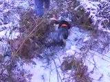 wachtelhund de 4 mois chasse ds la neige ac jack russel
