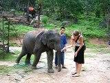 Simone et l'éléphanteau