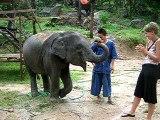 Simone, l'éléphanteau et l'harmonica