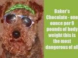 pet training and dog behavior