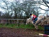 Oxer galop