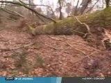 Toulouse : Accès interdit à la forêt de Bouconne