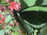 Butterfly Angels Studio Edit