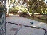 Oiseaux-perruches-Hyères