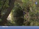 Découvertes d'espèces de poissons protégées dans le Las