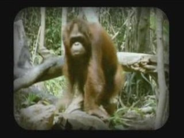 Macaco - Mama Tierra (National Geographic Channel )