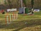 Entrainement d'agility 01/03/2009 Peps 1er parcours