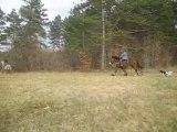 Sortie chevaux nathalie 021