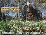 Concours cheval de trait 22 MARS 2009