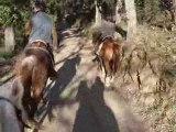 à cheval sur les pistes du massif des maures