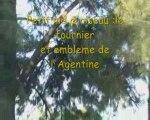Avion France Argentine Pari Paname en Argentine Gilbert Troger début de 2 ans1/2 en Amérique du Sud en camping car