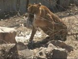 China zoo: feeding one animal to another for 5 euros