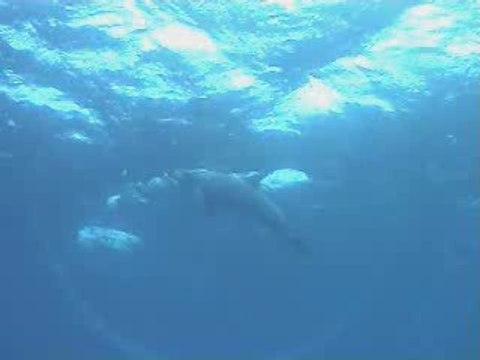 mon frère dauphin