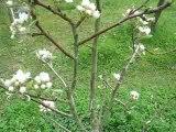 Nature : jeune arbre fruitier