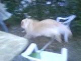 chien qui saute !! lol