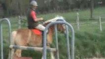 Khyros, poney haflinger