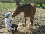 cheval, amour de lili et chouchou