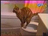 Gatto popò nella tazza!