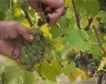 Château Bertinerie : vins de Bordeaux