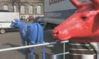 Koeien voor de Tweede Kamer