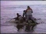 Orques prédateurs des mers (2/3)