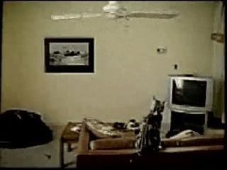 Chat vs ventilateur de plafond