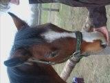 Wacho est Mon cheval. Mon cheval est mon équitation. Mon équ