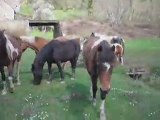 Petite visite aux poneys