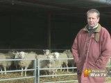 Pratiques innovantes agricoles : Des couverts à l'élevage