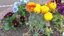 Petites fleurs petites fleurs