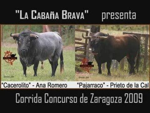 Cacerolito y Pajarraco, dos toros bravos